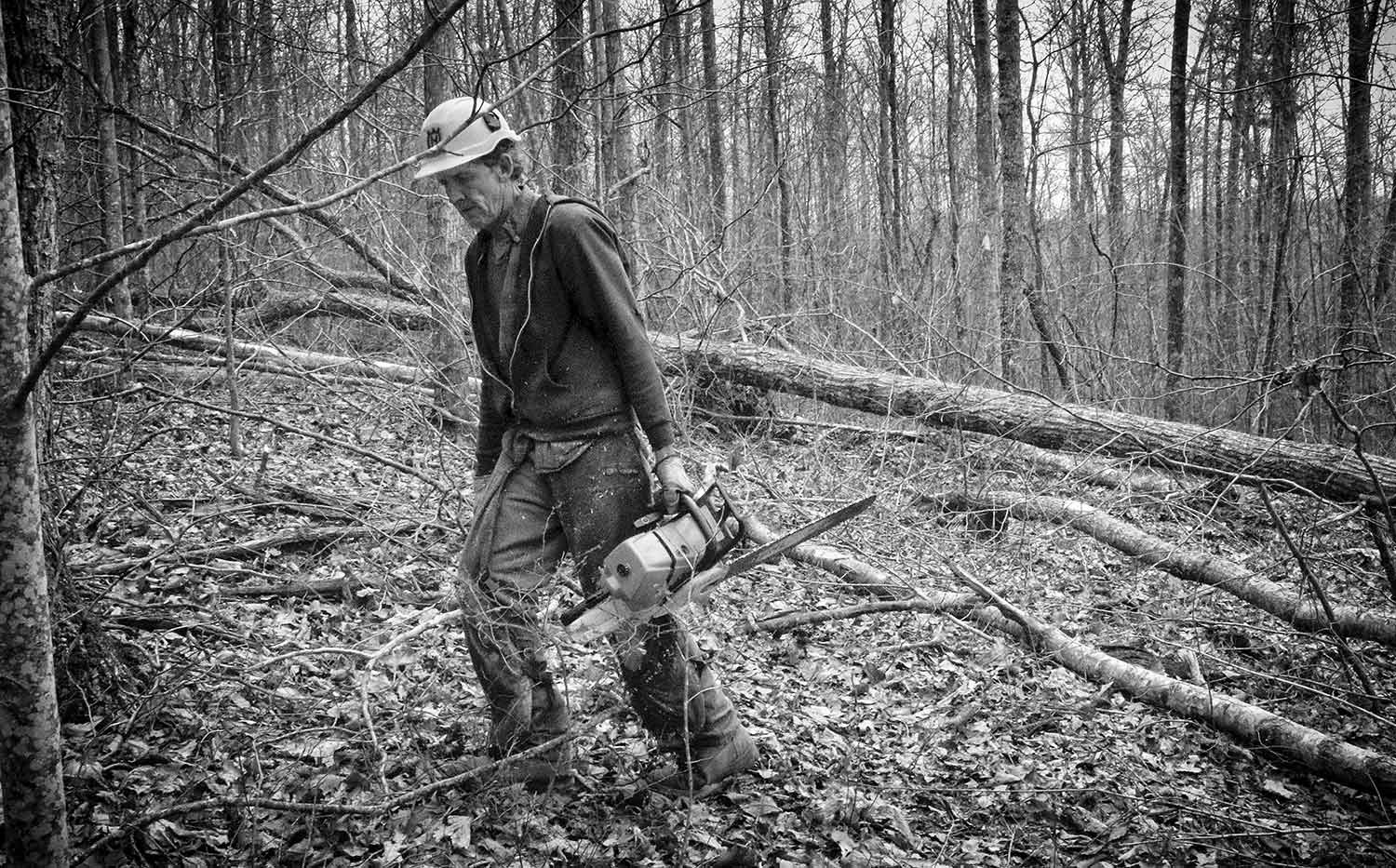 Roy Steakley fells a tree which will be used to make table tops. photo by Torrey Feldman - 2016