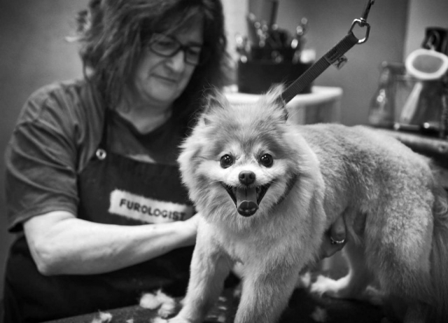 Pam Town and Foxy cannot contain their excitement at The Paw Spa. photo by Emily Cullum - 2018