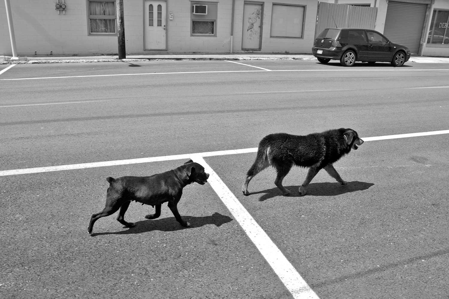 Two canine friends obey the rules of the road while searching for water and shade. photo by Corinne Oglesby - 2010