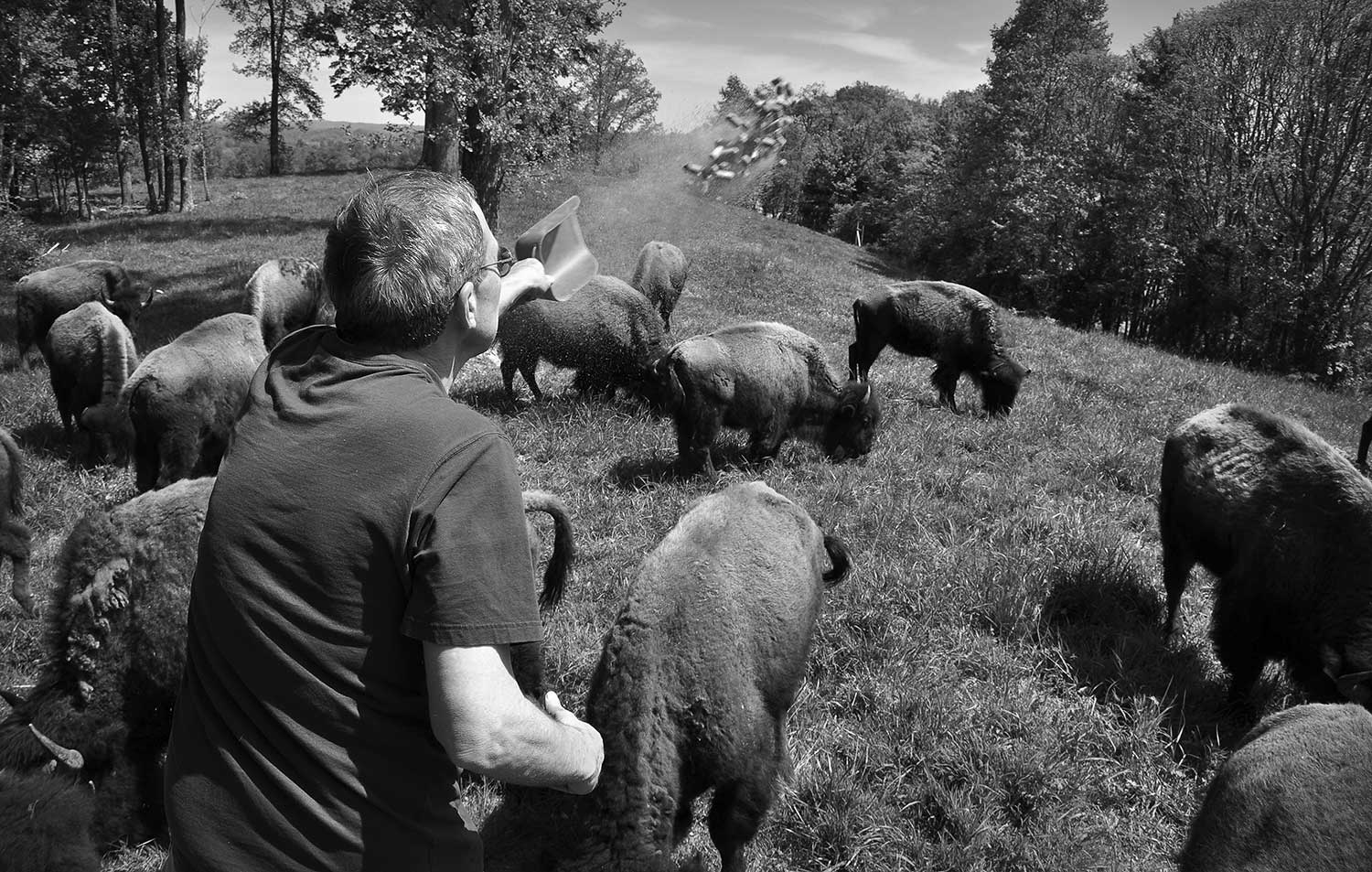 Accountant, Bill Kincaid, escapes the office for a moment of peace at his buffalo farm. photo by Madeline Brown - 2012