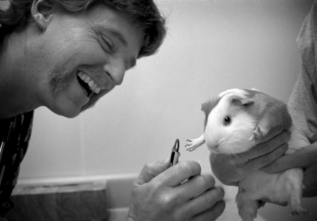 Veterinarian Bill Sander takes a break from surgery Friday to trim a patient's toenails. photo by Cory Soldwedel- 1999